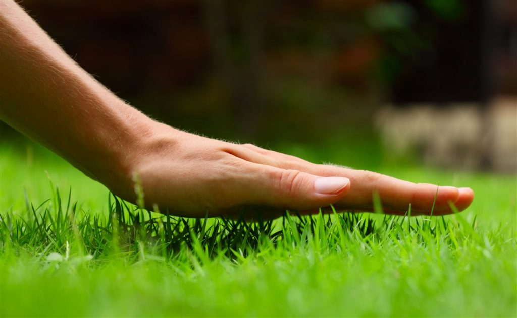 Touching grass | Be Informed Home Inspections | lawncare Dallas